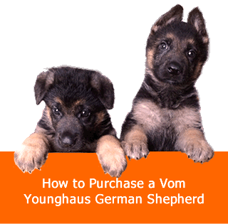 How to Purchase a Vom Younghaus German Shepherd
